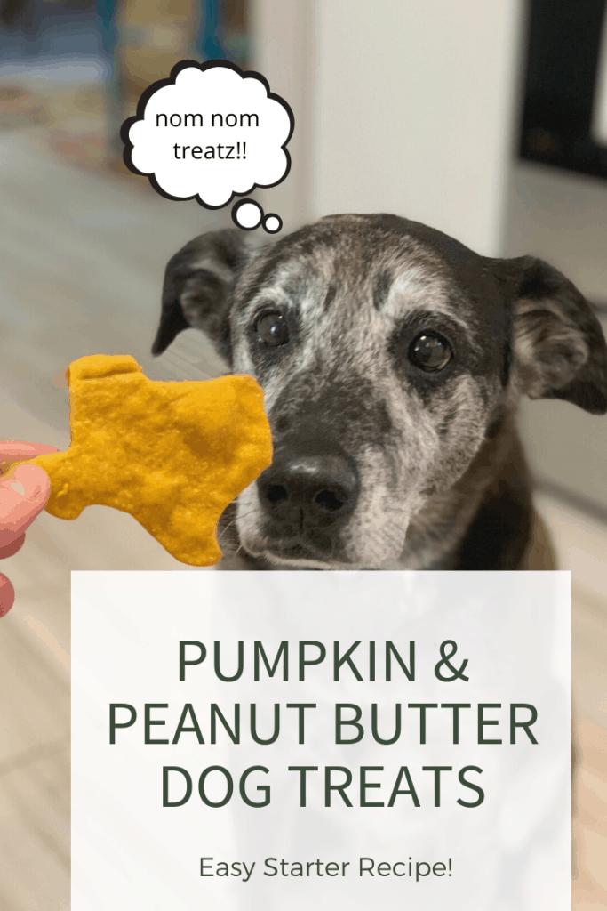 peanut butter and pumpkin dog treats recipe pinterest
