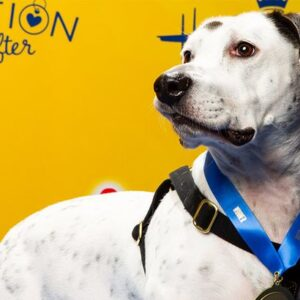 2019 best in rescue winner photo of white dog on yellow background hallmark channel