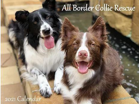 border collie calendar