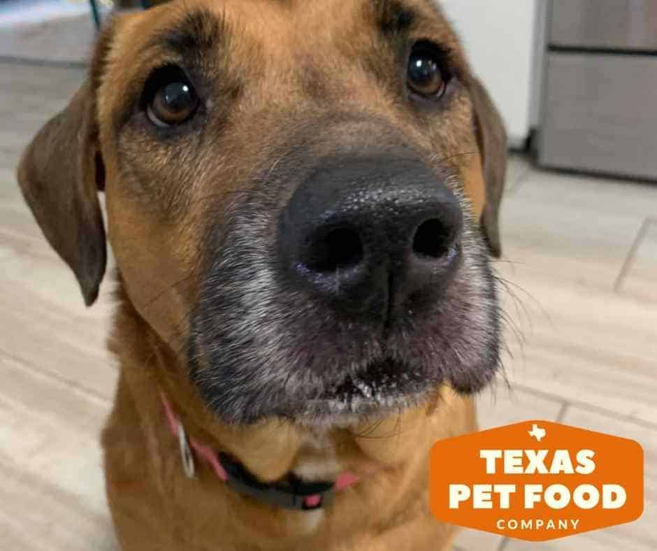 sweet Tammy the dog has allergies but with Texas Pet Food Company her hair is growing back.