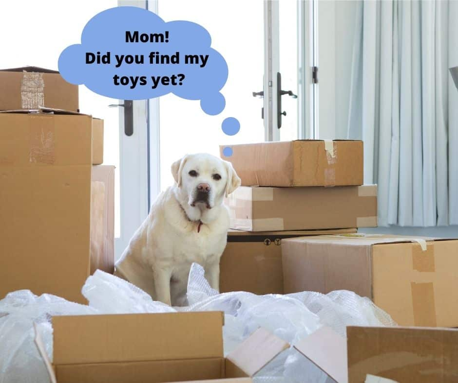 moving with your dog, dog surrounded by moving boxes.