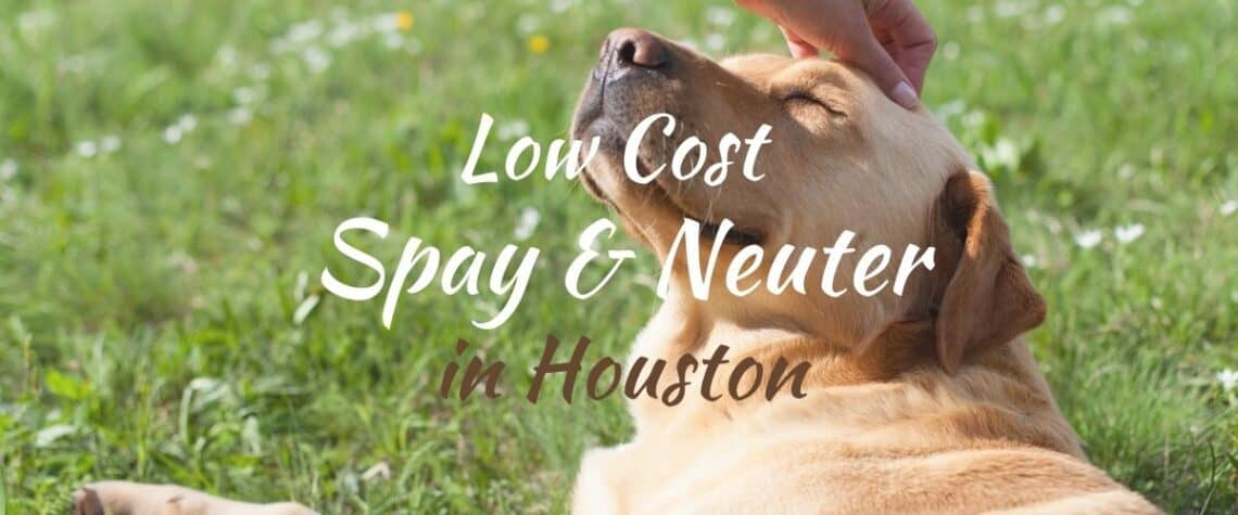 list of low cost spay and neuter clinics in houston