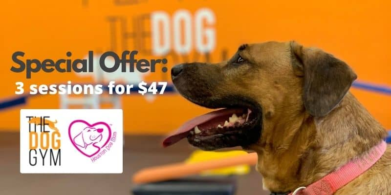 Special offer for The Dog Gym in houston promo code coupon discount