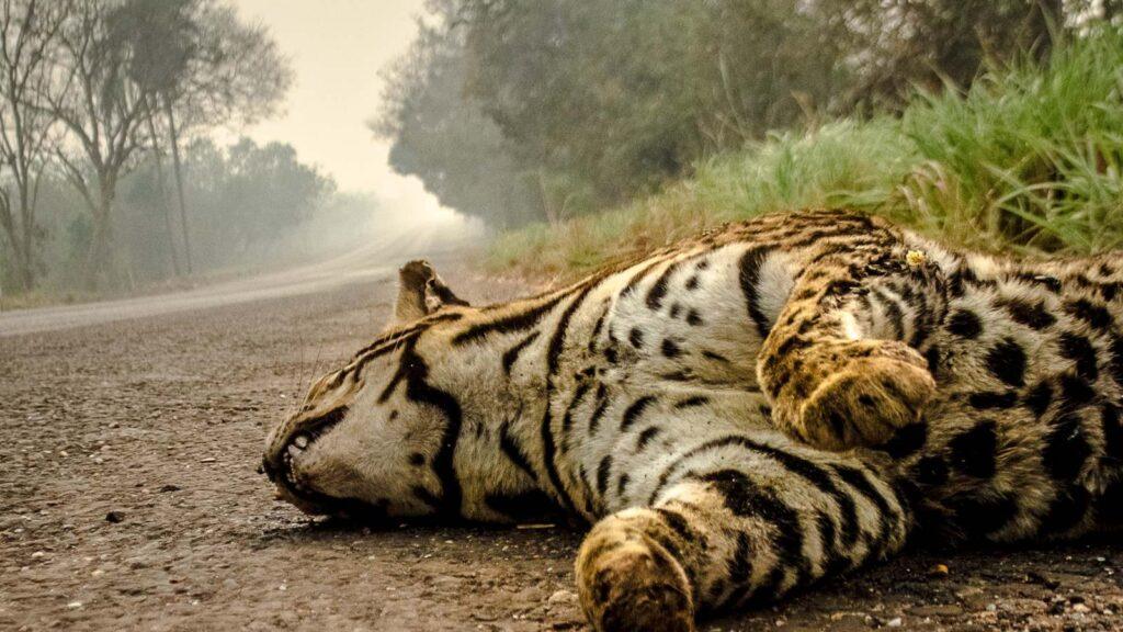 'Ninguém quer ver de perto a morte que o fogo traz para o Pantanal. Eu vi'