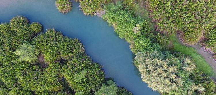 BAL Swamp (1) - 750x330_750x330