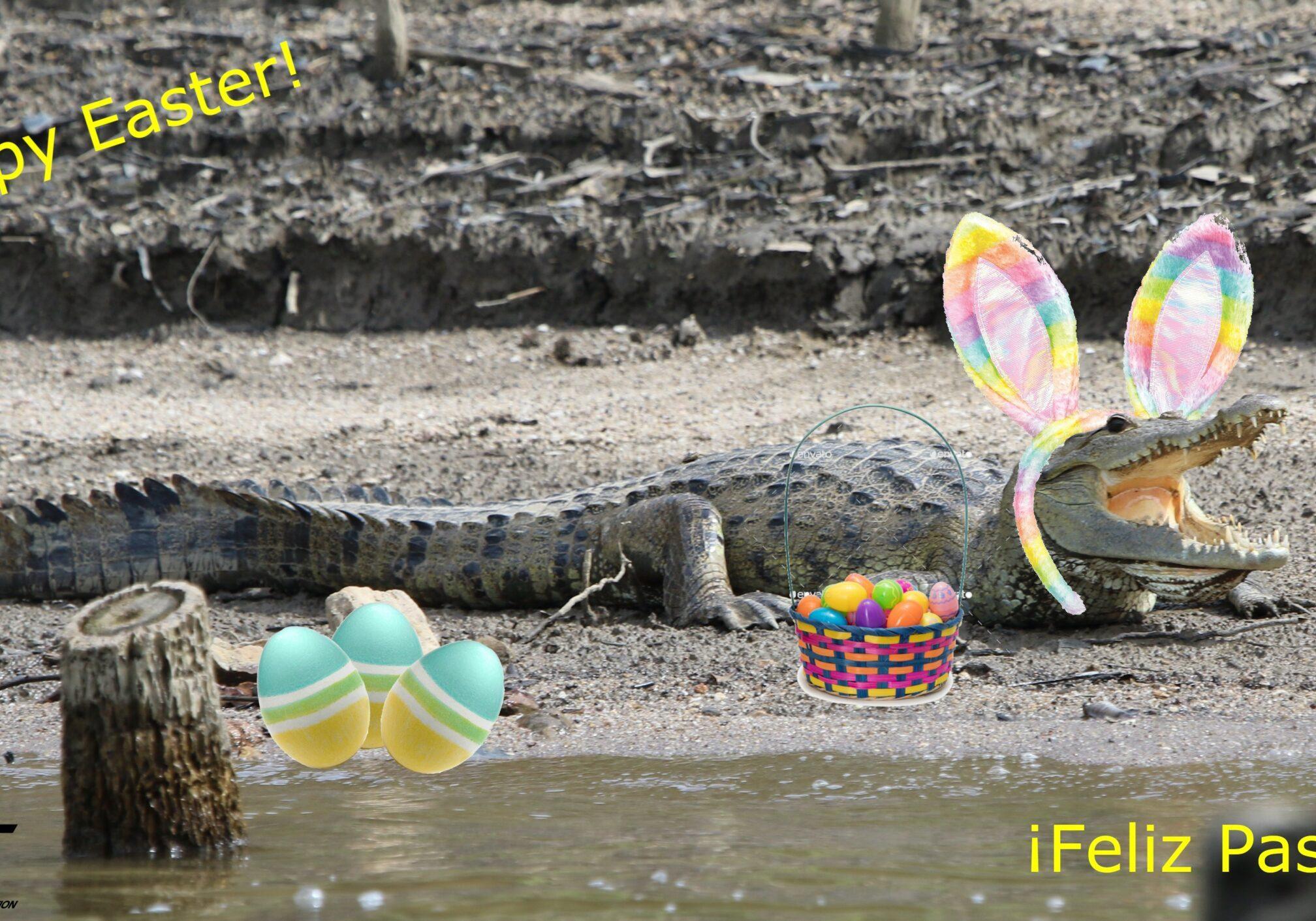 Morelet's Croc