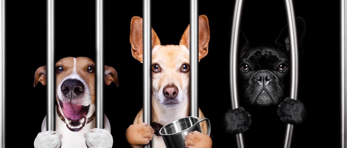 """Howl, no: Metro seeks more money for anti-dog park network,"" Oregonian, July 5, 2016."