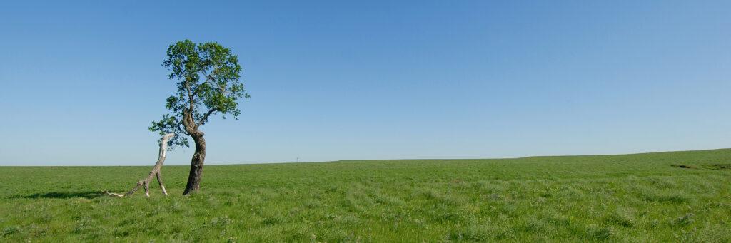 10x30 lone tree