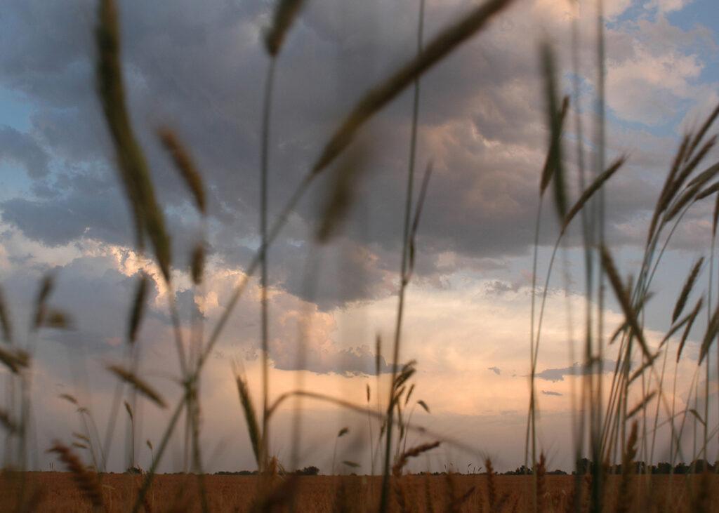 5x7wheat