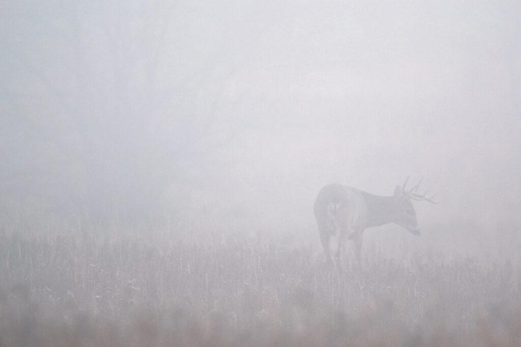 Fog Deer120120120029