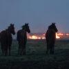 Prairie_fire_horse