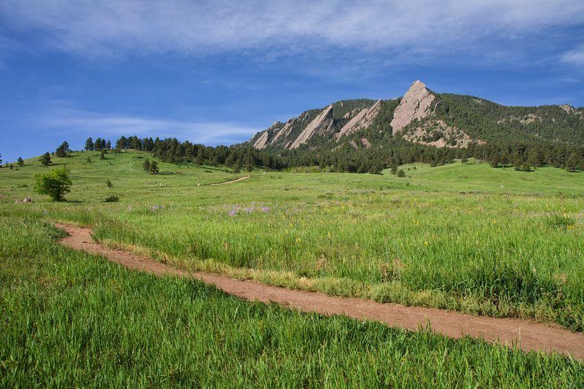Reclamation & Native Grasses