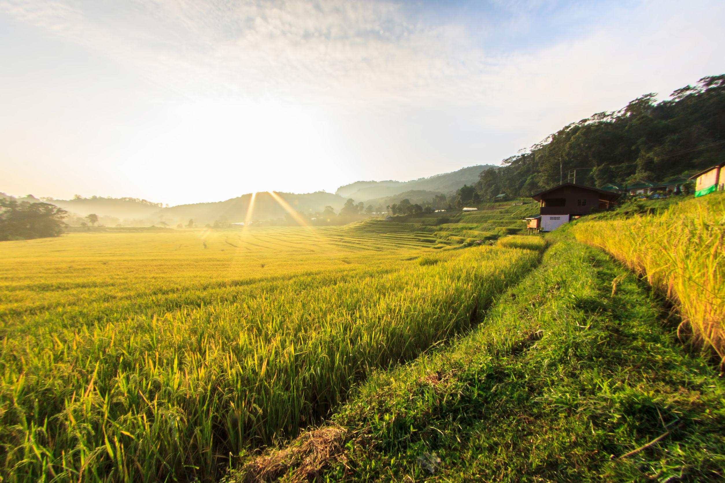 FARM & AGRICULTURE Seed