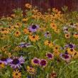 Wildflower Mixes