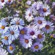 Wildflowers & Forbs