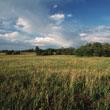 Pasture & Reclamation