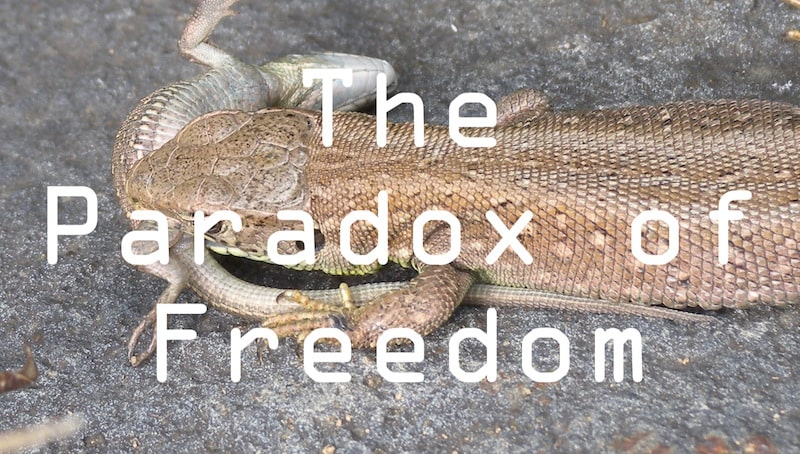 The Paradox of Freedom