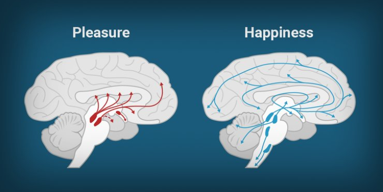 pleasure vs happy brain pics