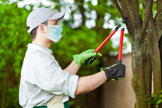 Pandemic Gardening
