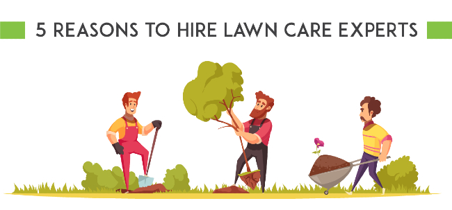 Lawn Care Expert