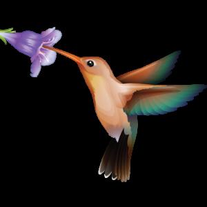 Hummingbird logo 1024 color