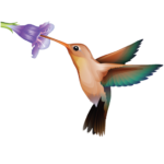 cropped-HummingbirdSquare512.png