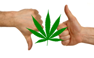 Cannabis Re-Cap 2018|The Good, The Bad, The Ugly
