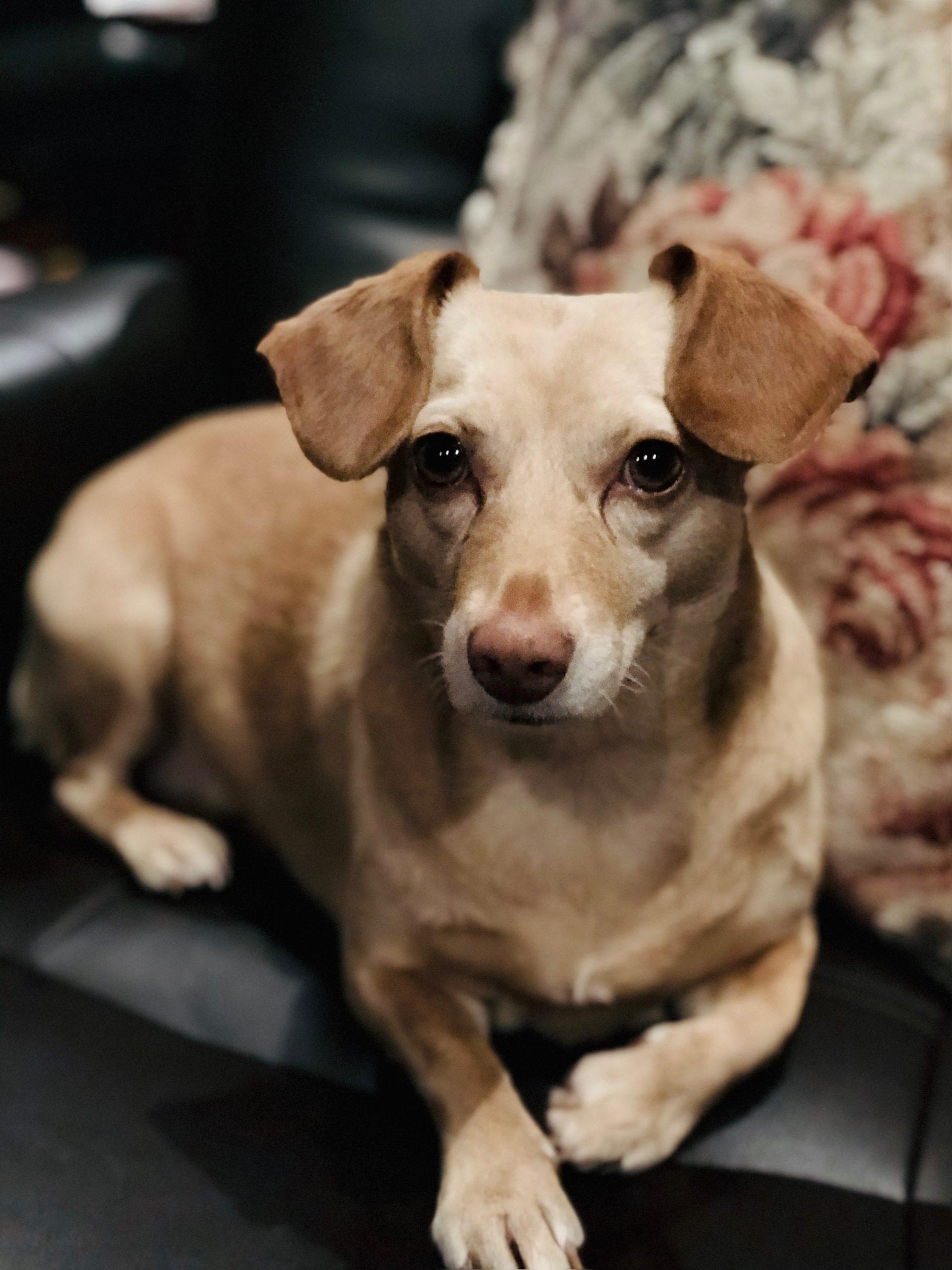 Daisy Jane = The Cannabis Dog