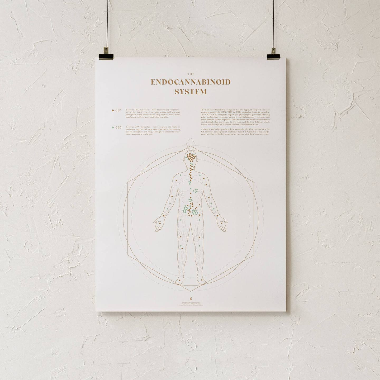 Endocanabinoid map