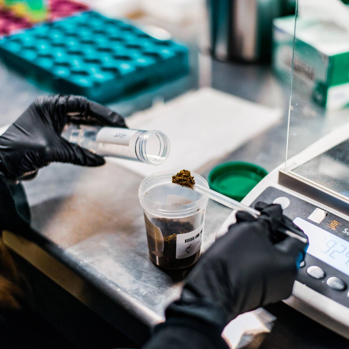 Cannabis Pesticide Testing