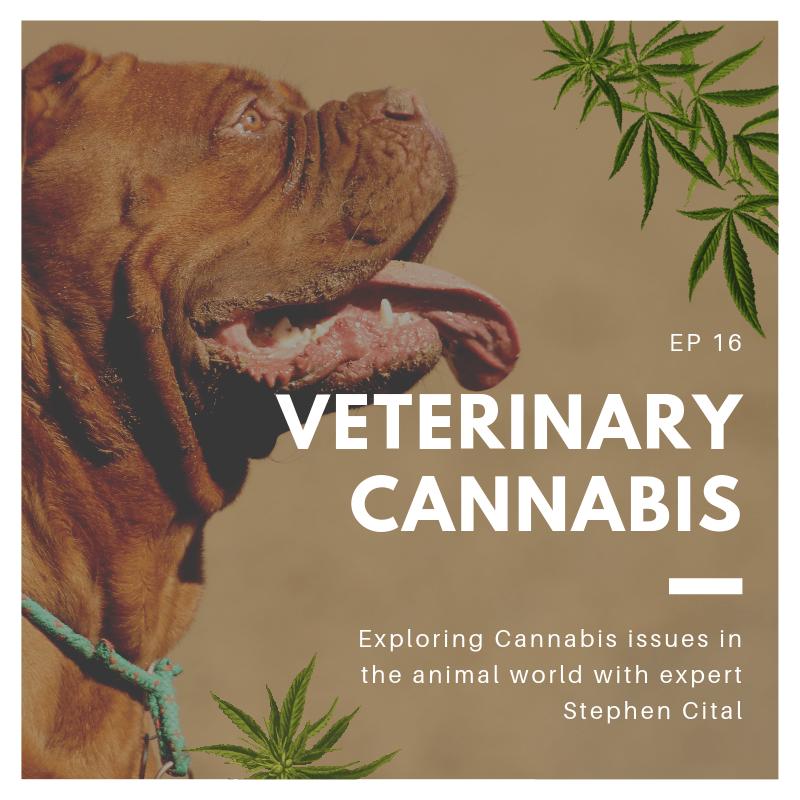 Veterinary cannabis