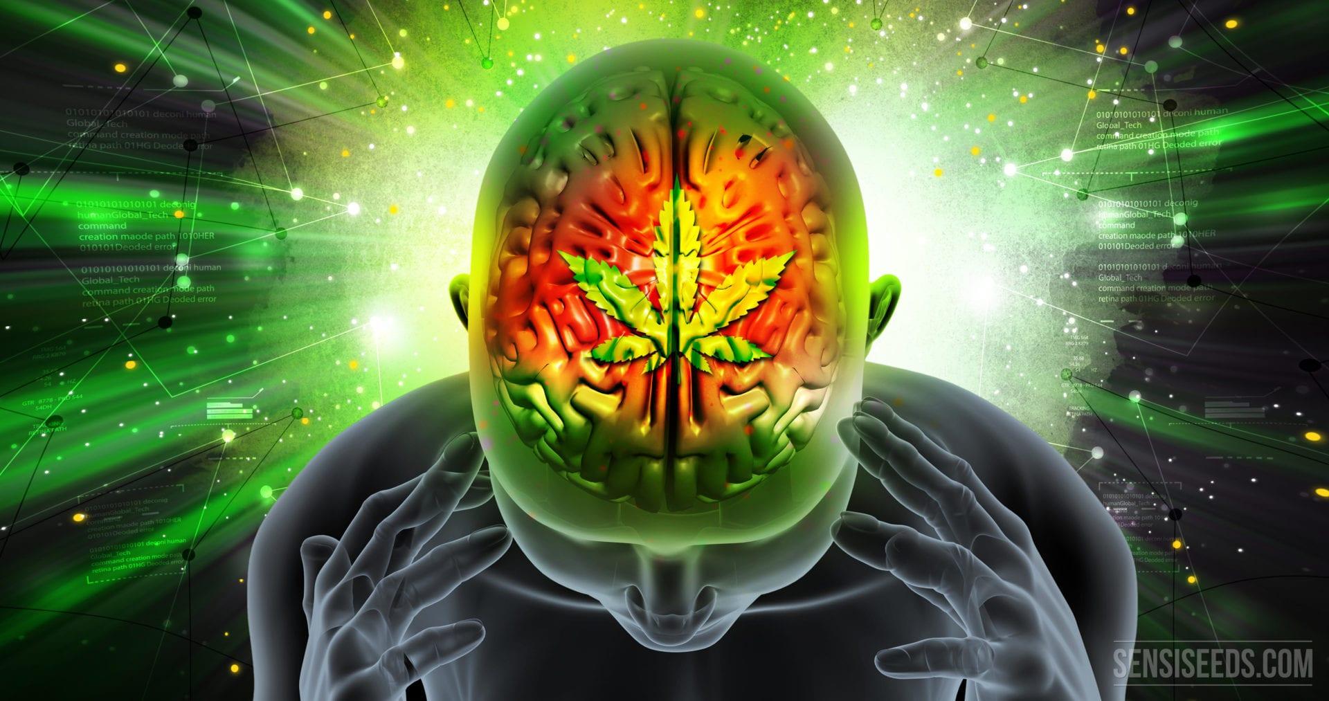 Cannabis for the Brain