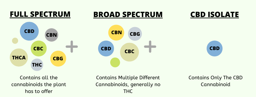 Infographic: CBD Isolate VS Broad and Full Spectrum CBD