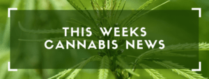 The Update 3/24 | Weekly Cannabis News