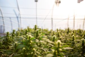 Cannabis Prisoners are Getting Second Chances at Eternel Hemp Farms