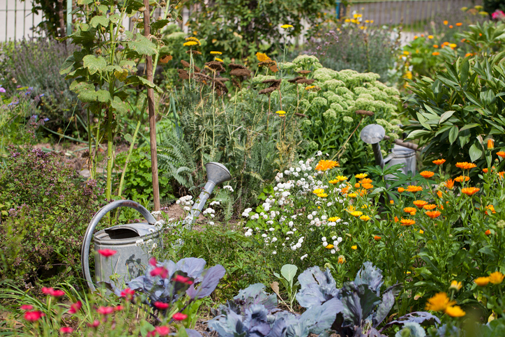 Little garden with native plants