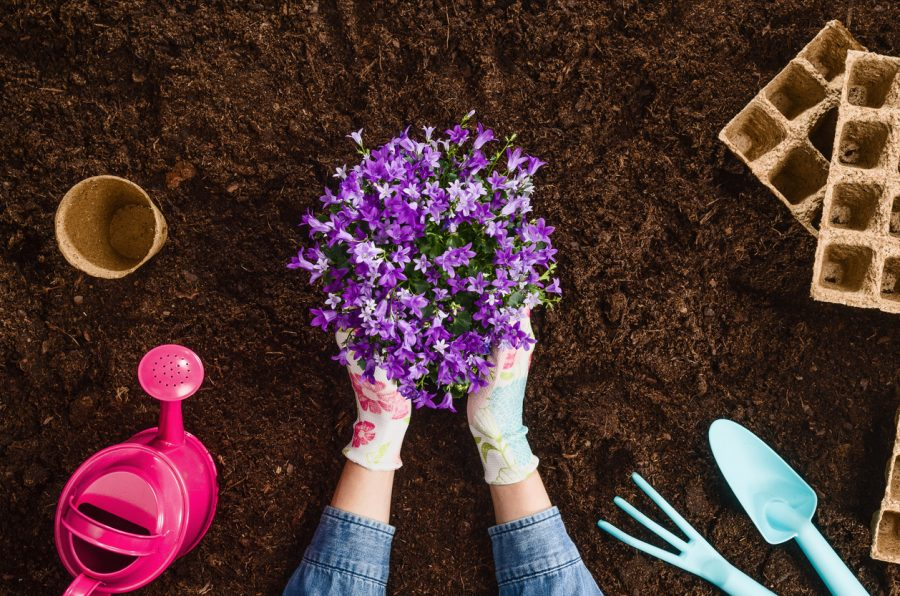 Planting a plant on garden soil