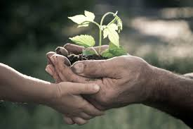 image of child and adult hands holding sapling