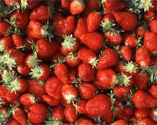 Florida Strawberry month