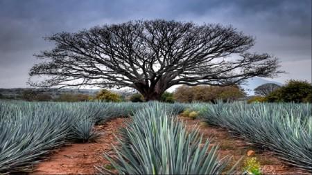 Lugares Turísticos de Tequila jalisco Pueblo Mágico de México