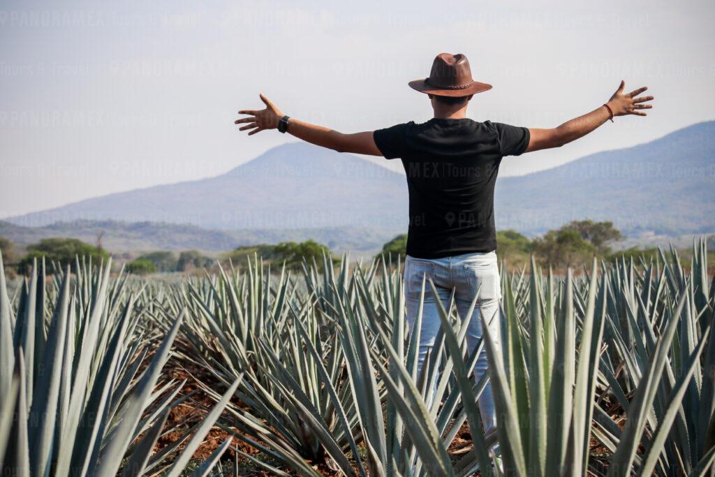 Tequila Jalisco Paisaje Agavero Patrimonio Cultural de la Humanidad UNESCO 2006
