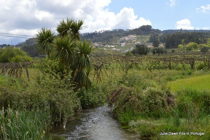A pretty spot full of noisy frogs on the Portuguese Way of St. James from Barcelos to Quintiães