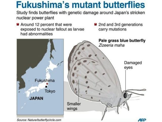 422192-mutantbutterflies-1344969393-425-640x480