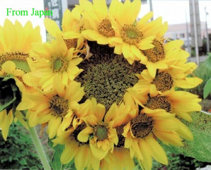 fukushima_29