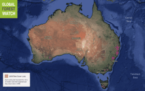 Map of Tree Cover Loss Australia 2019