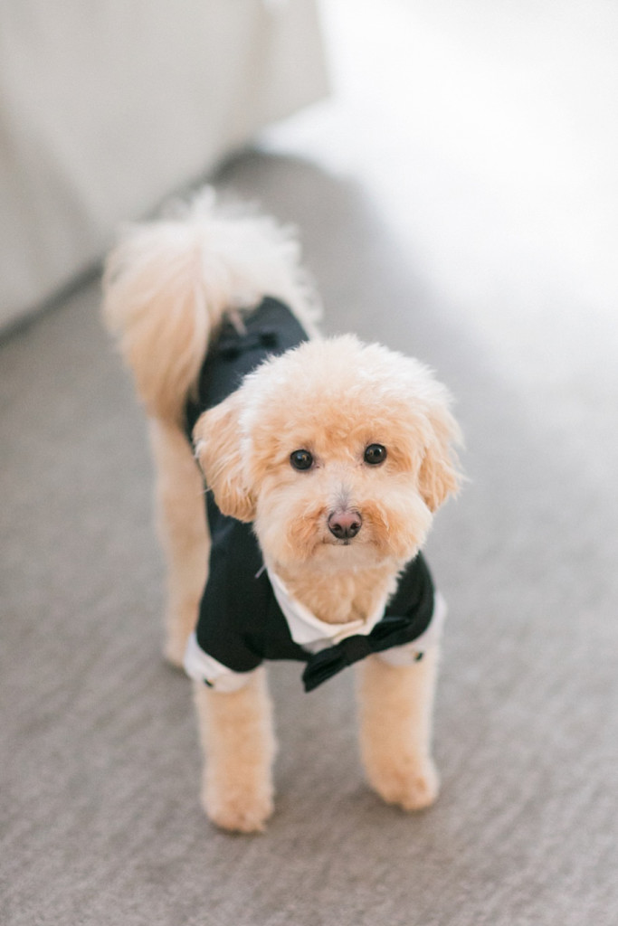 dog wedding tuxedo