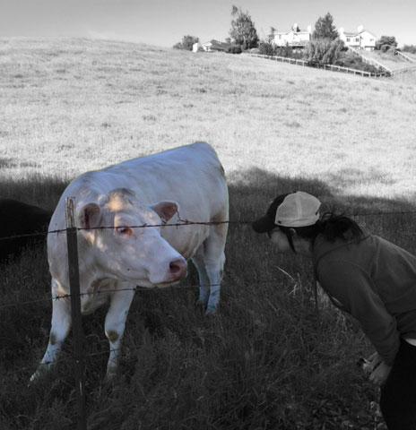 Cow and Julie Petaluma, CA