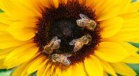 Pollinator Pathway Program at Parmelee - October 4