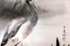 Heron-Fishing-1