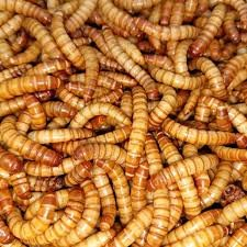 mealworms, mealies,